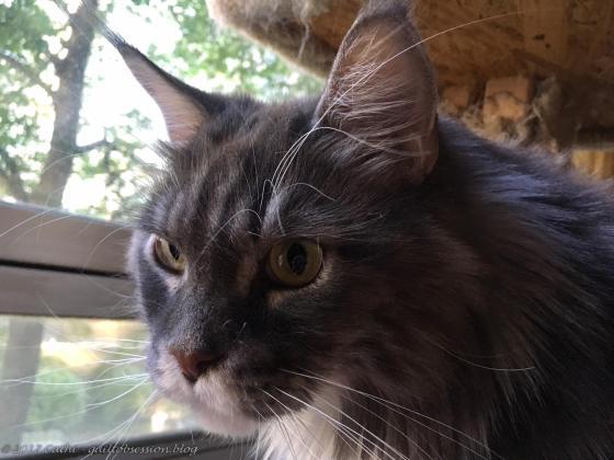 Baxter, late September 2017wtmk