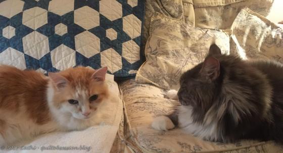 Baxter & Jake, October 15, 2017wtmk