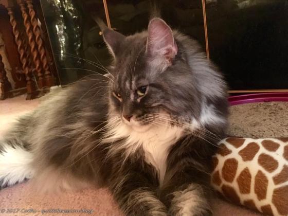 Baxter, October 24, 2017wtmk
