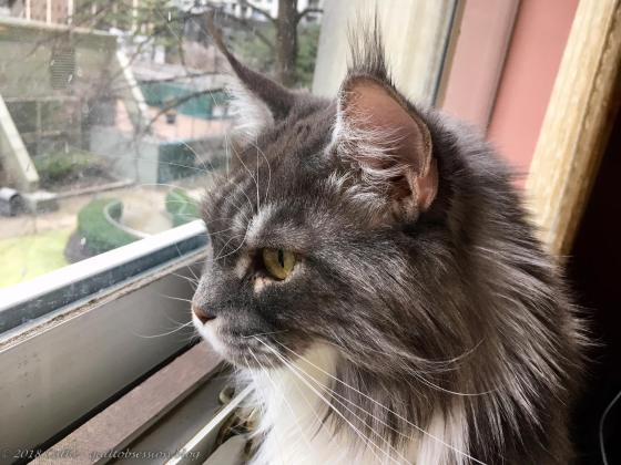 Baxter after January 2018 thawwtmk