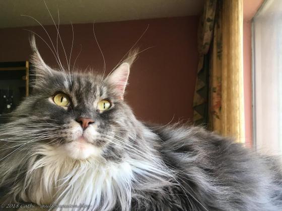 Baxter - Whiskers! IMG_1585wtmk