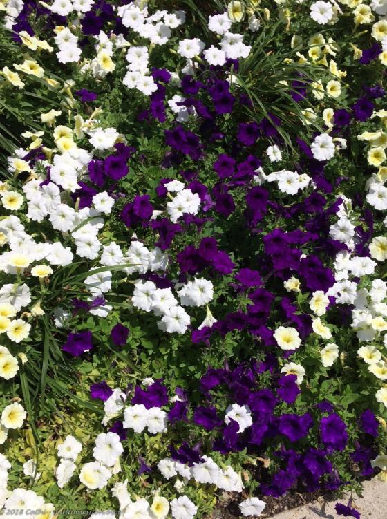 Flowers Outside TGH IMG_1802wtmk