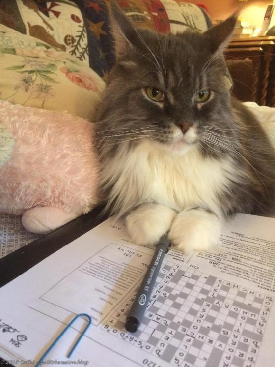 Baxter Does Crossword IMG_1825wtmk