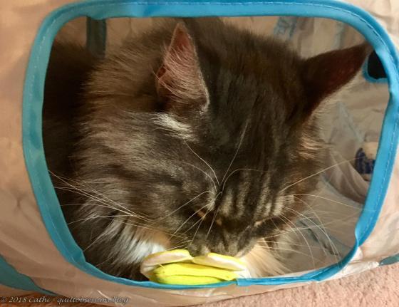 Baxter and New Catnip Toy IMG_2392wtmk